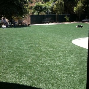 North County Humane Society Fake Grass